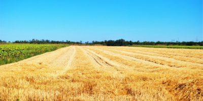 Agrar-Handel